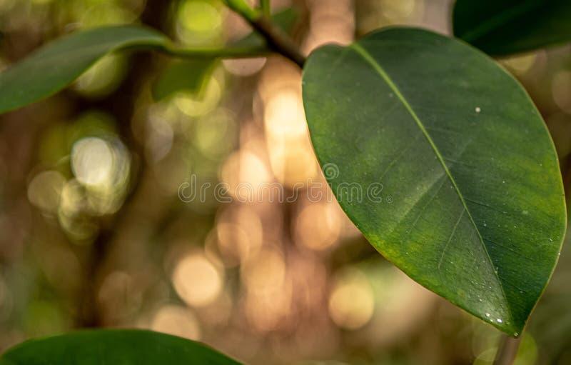 Close up fantástico de uma folha com bokeh no fundo imagens de stock royalty free