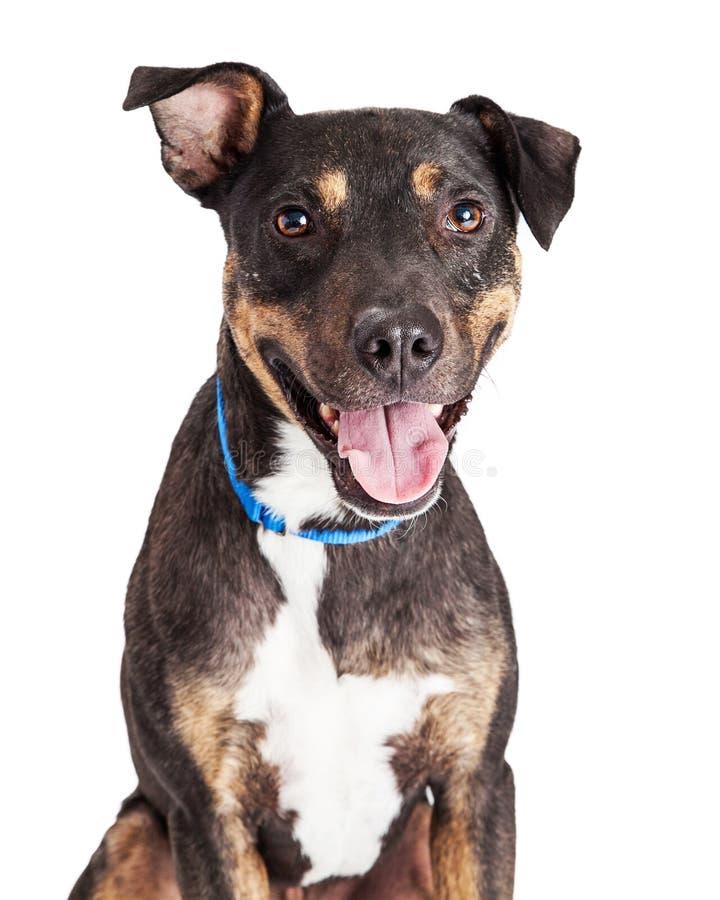 Close-up feliz de Mutt Dog imagem de stock royalty free