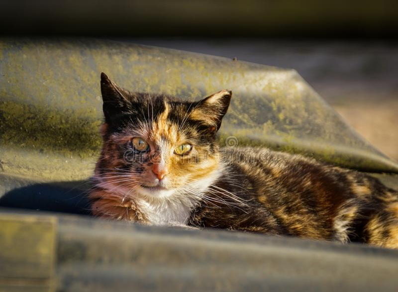 Cat resting in sun. A close up of a female cat looking at the camera while resting in the sun royalty free stock photo