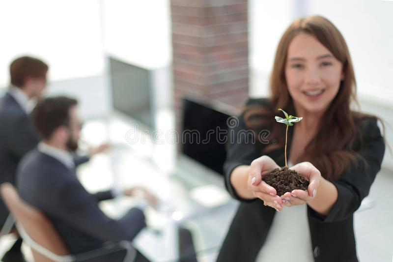 Female environmentalist showing fresh sprout. Close up. female environmentalist showing fresh sprout .photo with copy space royalty free stock images