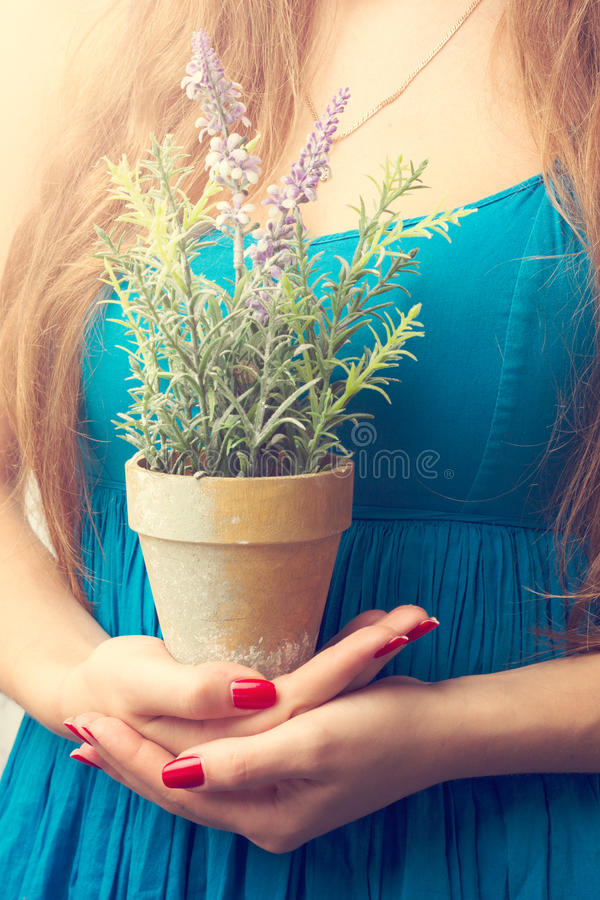 Close Up Of Female Hands With A Flower Stock Photo