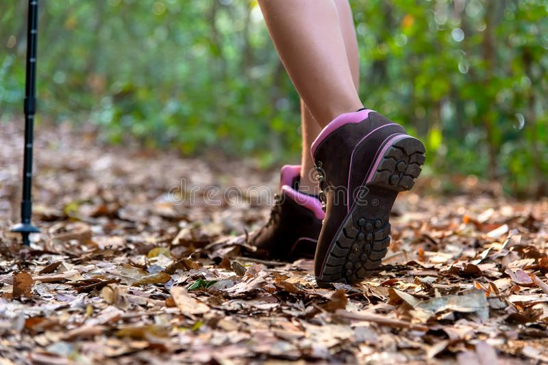 Close-up of female hiker feet and shoe walking on forest trail. stock photo