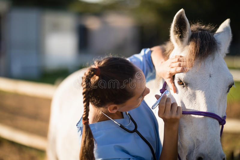 Close up of female vet examining horse eye. At barn stock photo