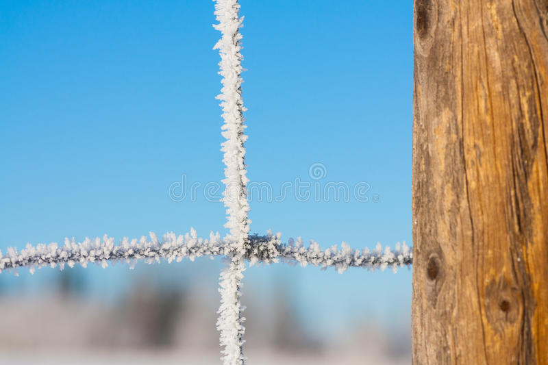 Download Close-up Of A Fence Covered In Hoar Frost Stock Photo - Image of outdoor, scenery: 64649350