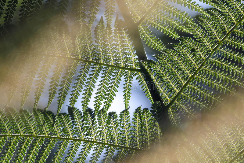 Close-up of a fern frond. In Kells Bay Gardens in Cahersiveen, County Kerry, Ireland royalty free stock images