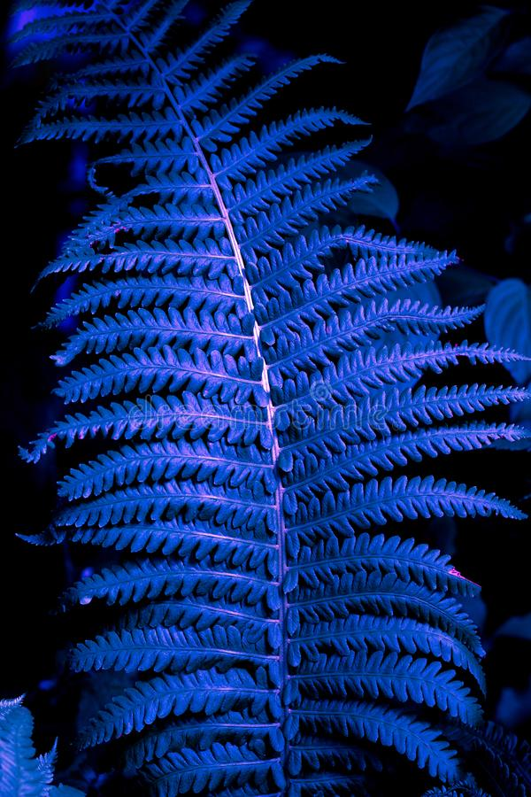 Fern leaf texture trendy neon toned. Close up fern leaf texture trendy neon toned stock photo