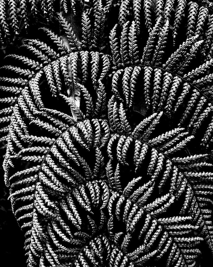 Close-up of fern leaves. Close up of fern leaves stock images