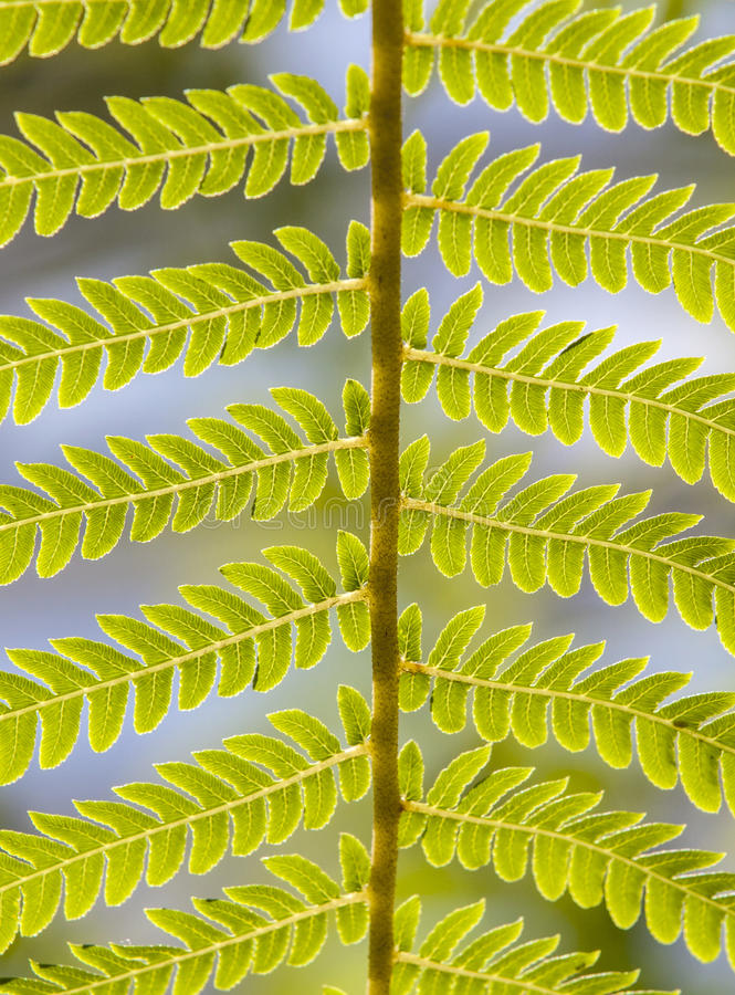 Close-up of fern leaves in tropical garden stock photography