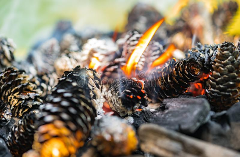 Barbecue Grill, close-up of pine cones and charcoal stock photos