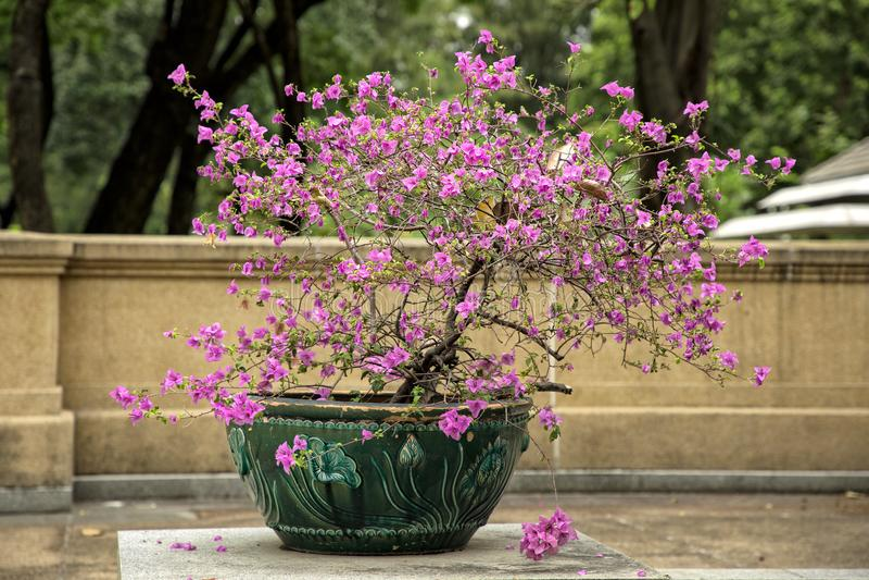 Flower arrangement in garden royalty free stock images