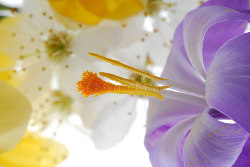 Close up on flower bouquet royalty free stock photo