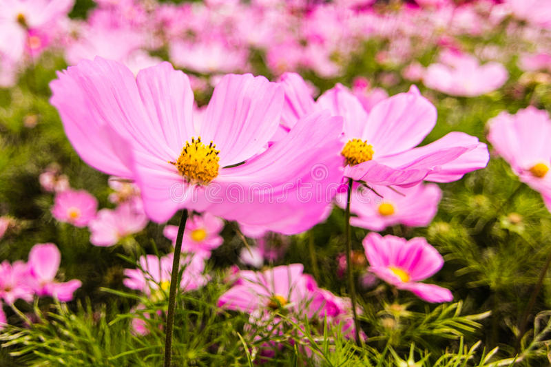Close-up of a flower. Collection of wild flowers in a garden dublin stock image