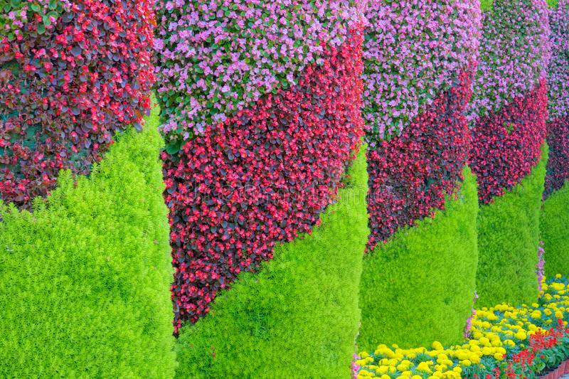Flower pillars. The close-up of flower pillars in parterre stock photography