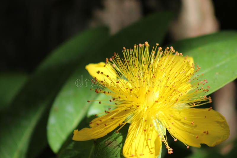 Close Up Of A Flower stock image