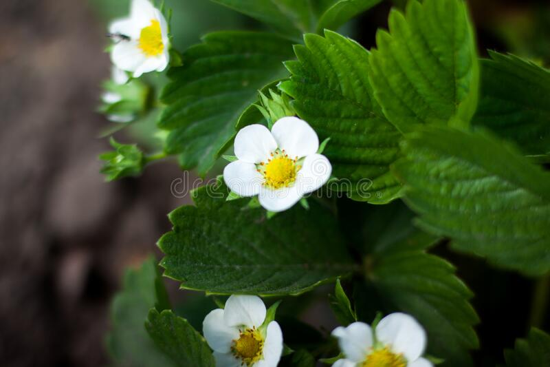 Close-up Of Flowers Free Public Domain Cc0 Image