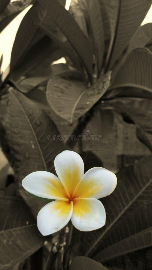 Close-Up of flowers stock photos