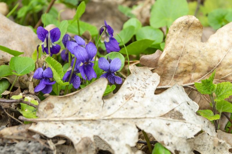 Close-up of flowers in the forest in a clearing royalty free stock photos