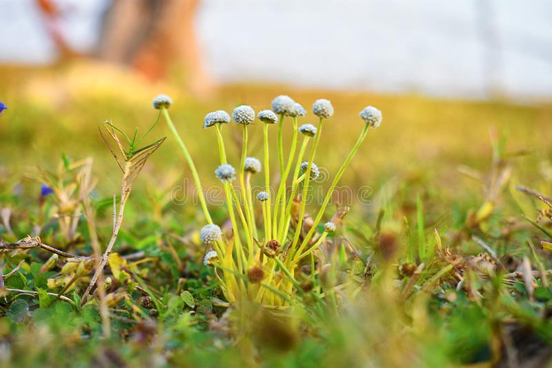 Close up of the flowers of grass in a spring morning stock image