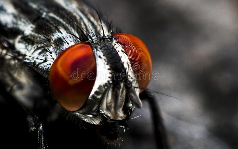 Close up on fly eyes stock photos