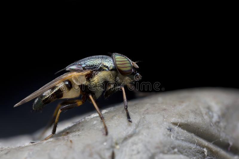 Close up fly stock images