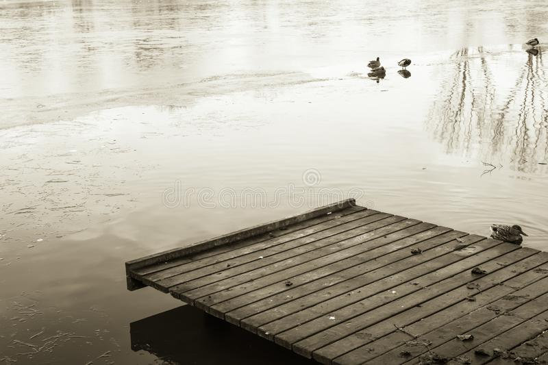 Close up on footbridge on lake with ducks in winter season in black and white sepia, ljubljana, slovenia stock photography