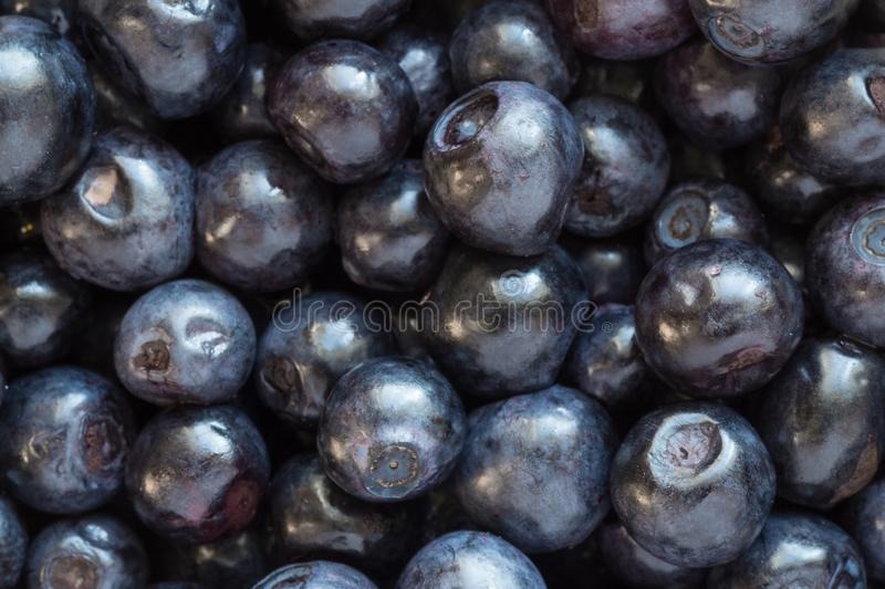 Close up of fresh bilberries. Close up of heap of bilberries stock images