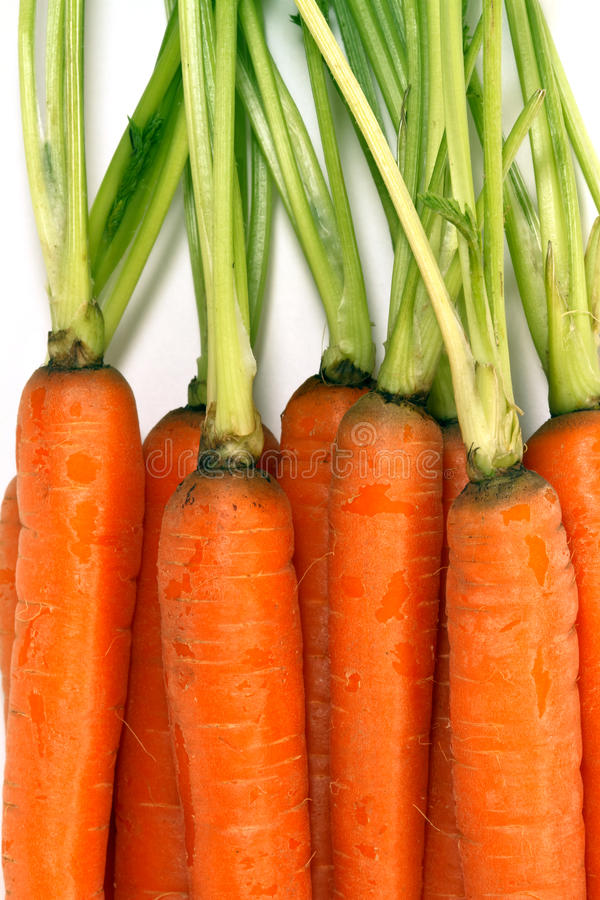 Close-up of fresh carrots royalty free stock photos