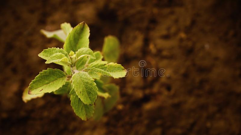 Close-up of Fresh Green Plant stock photos