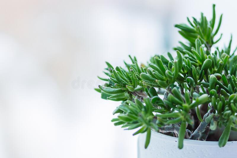 Close-up of Fresh Green Plant Against Tree stock images