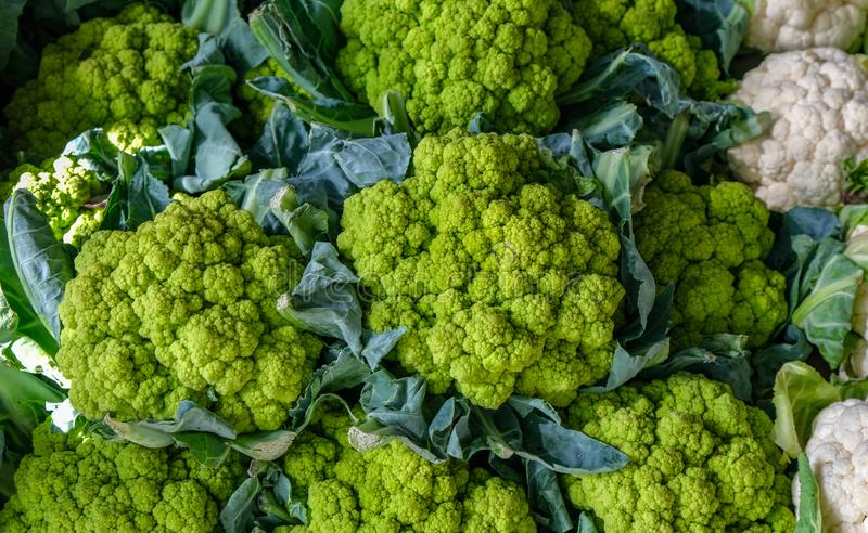 Close up of fresh group of cauliflower white and green. On market. Fresh cauliflower for sale at a market, new harvest, organic vegetables royalty free stock photos