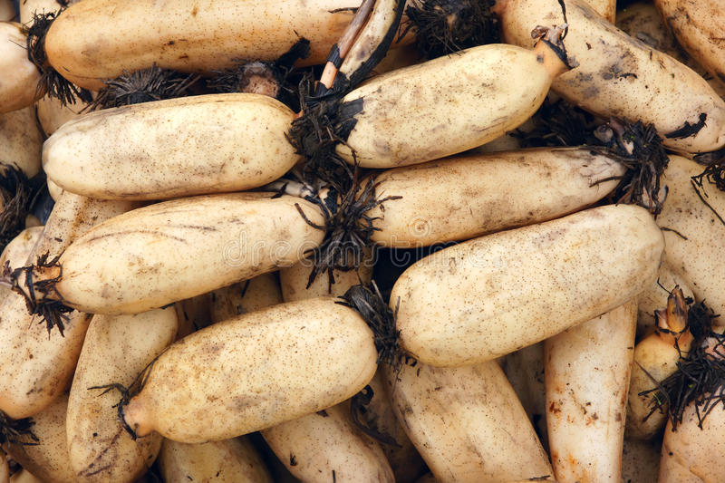 Download Lotus roots stock photo. Image of tuber, fresh, produce - 29803202