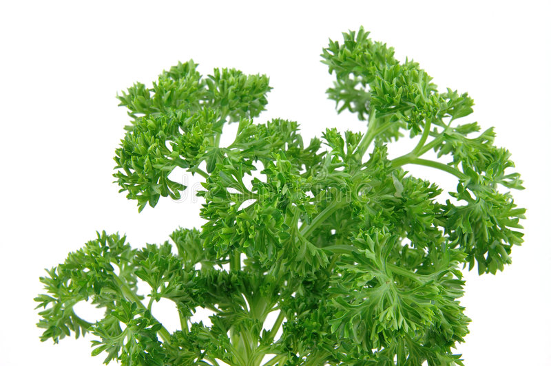 Close up of fresh parsley royalty free stock image