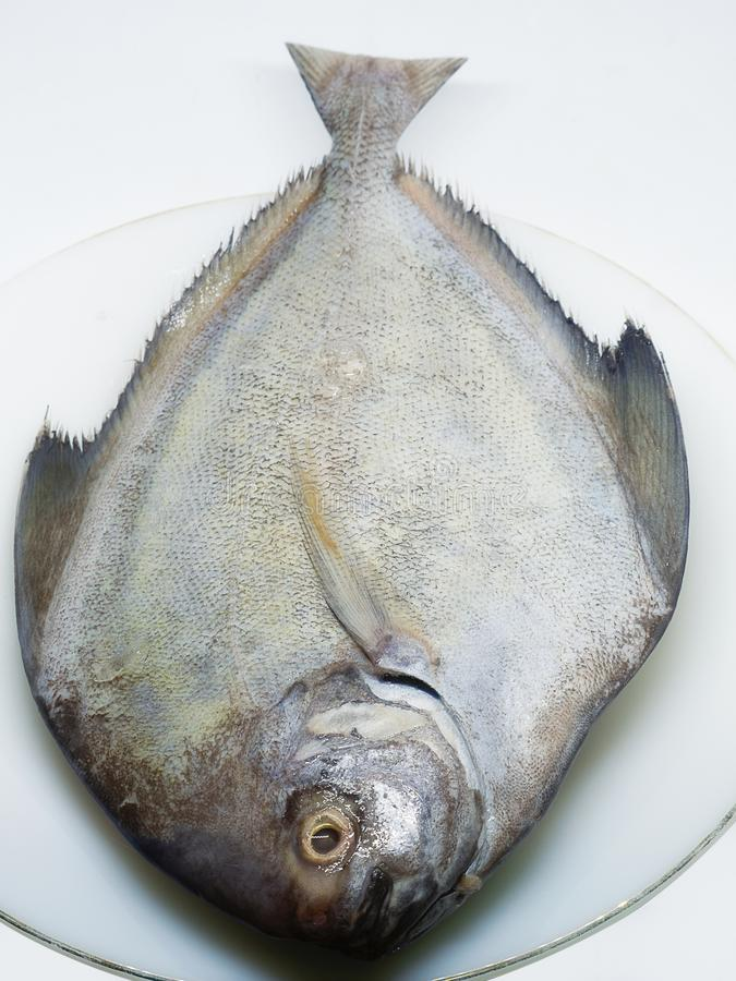 Close Up fresh pomfret. royalty free stock photo