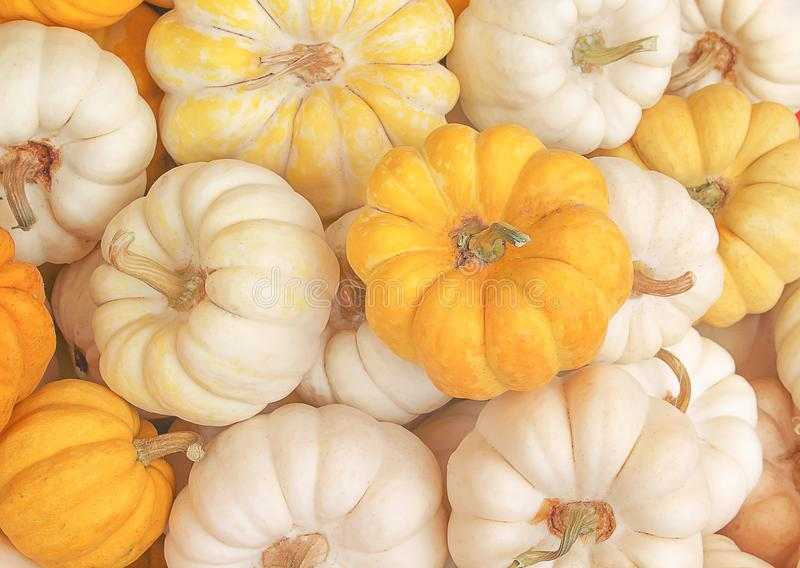 Fresh pumpkins group texture for nature organic background top view. Close up Fresh pumpkins group texture for nature organic background top view royalty free stock photo
