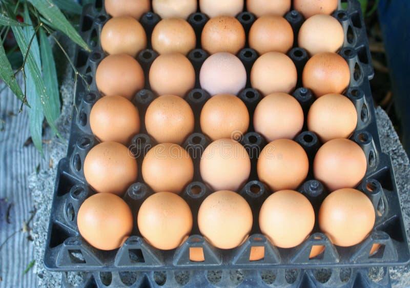 Fresh raw egg group. Close up Fresh raw egg group stock photo