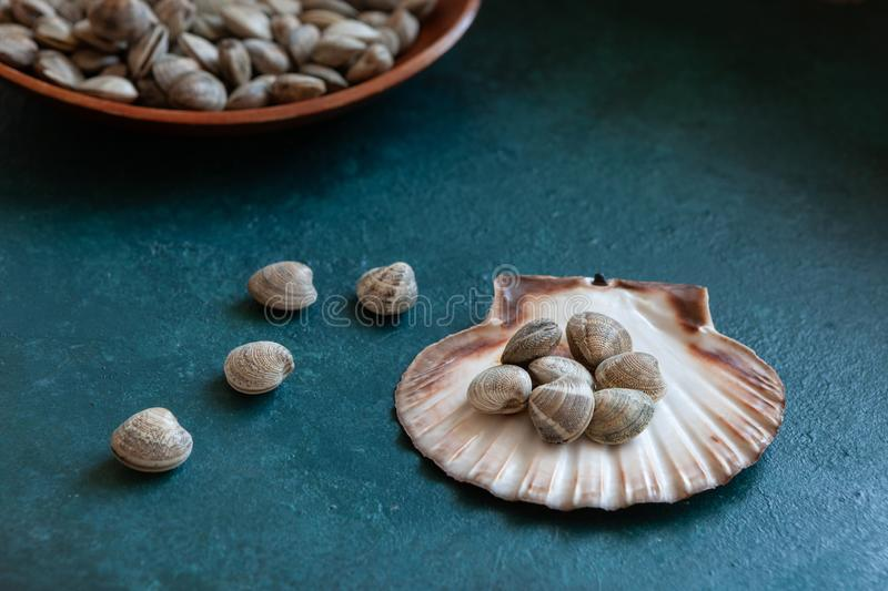 Close up of Fresh raw Surf chamelea gallina in the scallop shell on blue concrete background.  stock photo