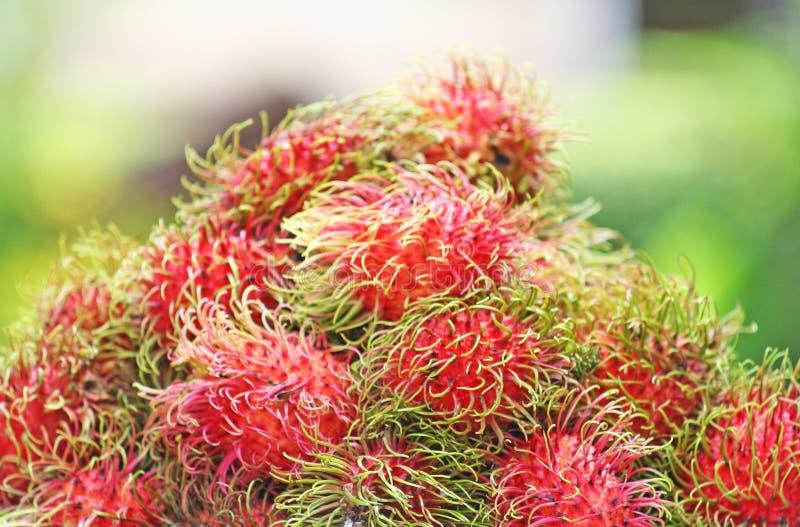 Fresh red rambutan,Tropical fruit royalty free stock photos