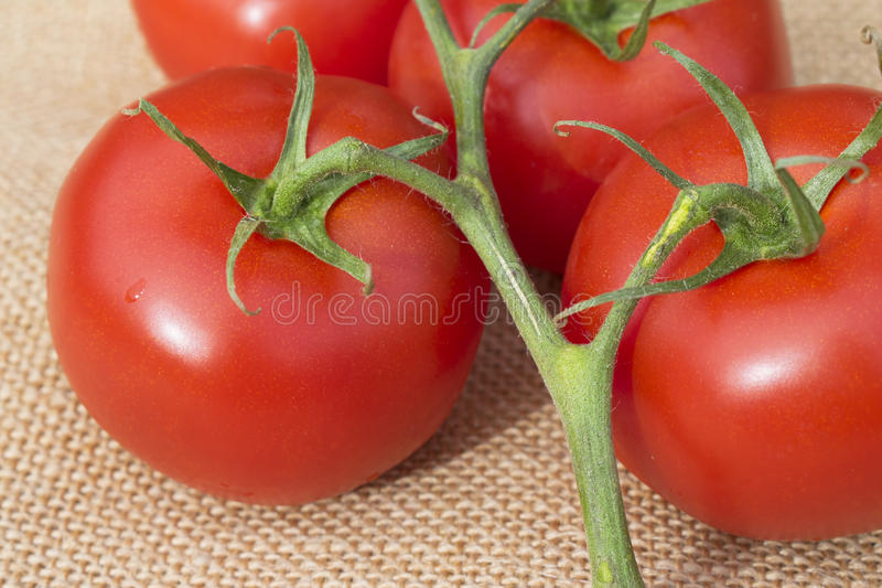 Close up of fresh ripe healthy Vine Tomatoes on a hessian material. Close up of a group of fresh ripe healthy Vine Tomatoes on a hessian material royalty free stock photos