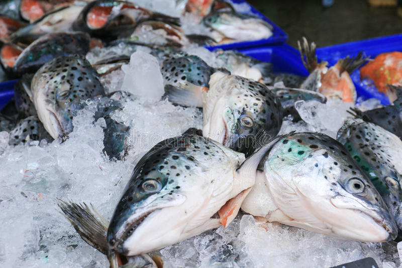 Close up of fresh salmon fish on open market royalty free stock photography