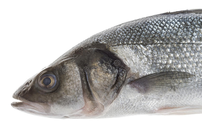 Close UP Fresh sea bass cut with head isolated on white. Background stock photo