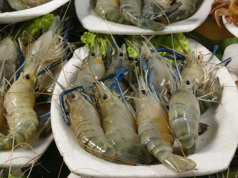 Shrimps at the market royalty free stock photography