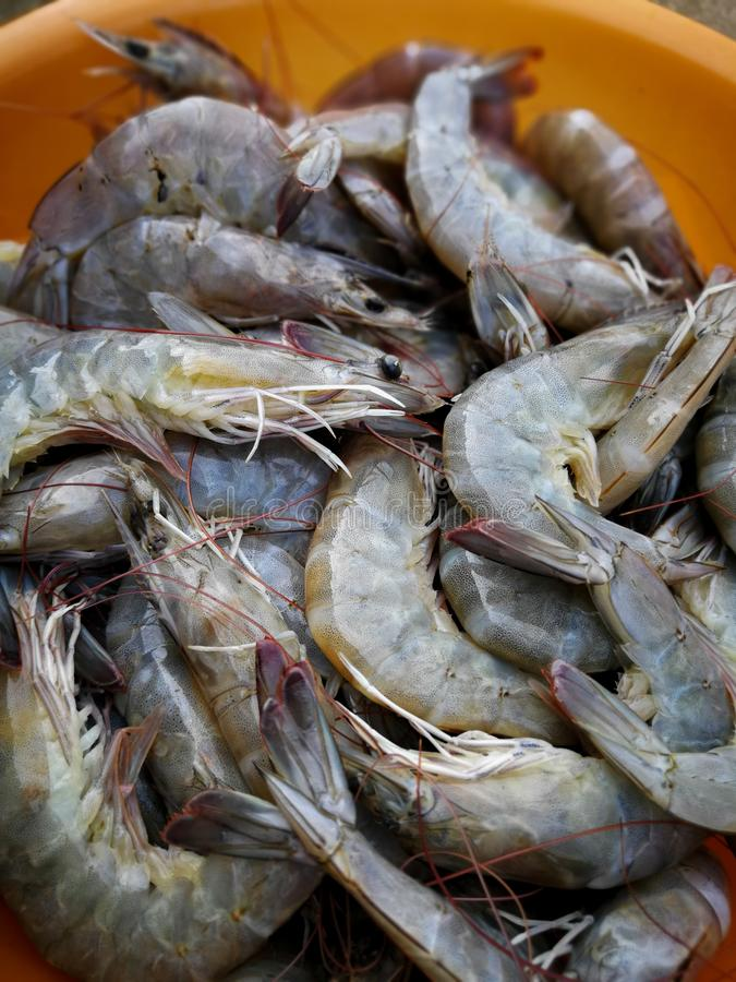 Close up of fresh shrimps from top view ready for sale at the ma stock photography