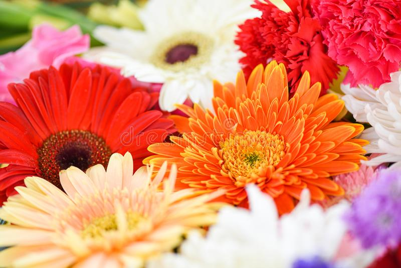 Close up fresh spring flowers bunch plant gerbera chrysanthemum colorful flower background royalty free stock photo