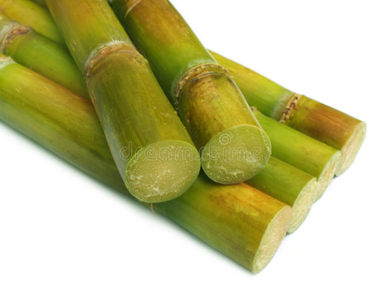 Close up of fresh sugar cane. Over white background royalty free stock images