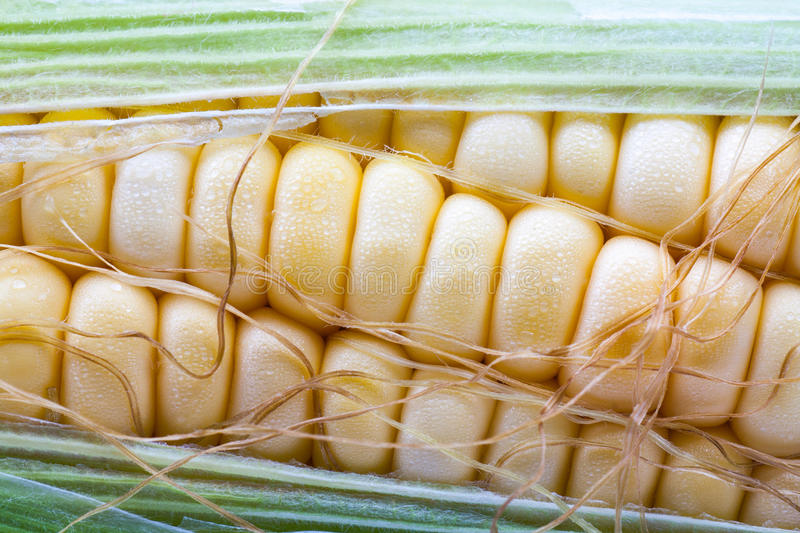 Close up fresh sweet corn royalty free stock photos