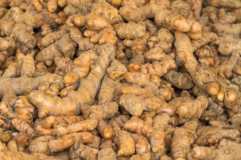 Close up fresh turmeric root (Yellow Root Zedoary, Curcuma longa stock photo