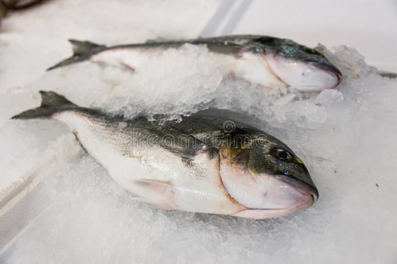 Close-Up Of Freshly Caught Gilt-Head Sea Bream Or Sparus Aurata On Ice Lined Up For Sale In The Greek Fish Market. A close-up shot of freshly caught gilt-head stock image
