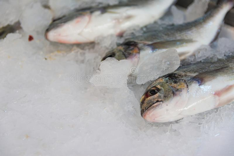 Close-Up Of Freshly Caught Gilt-Head Sea Bream Or Sparus Aurata On Ice Lined Up For Sale In The Greek Fish Market. A close-up shot of freshly caught gilt-head stock images