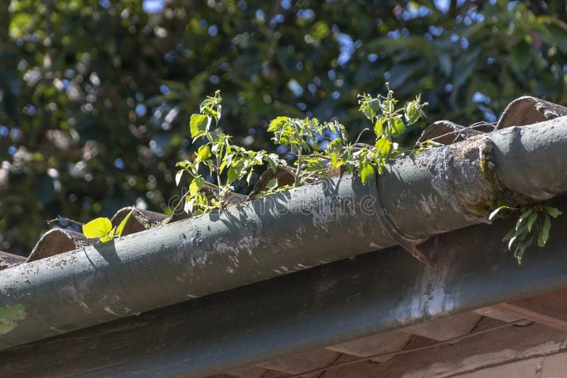 A old gutter. A close up front view of a old light and dark green gutter where the paint has peeled away from the outdoor elemts and that has weeds growing out stock photography