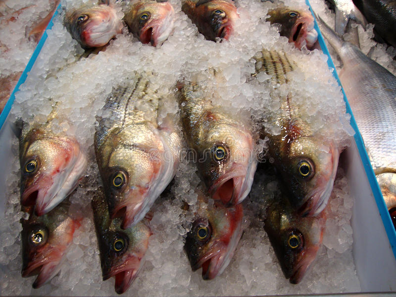 Close up of frozen fish stock images